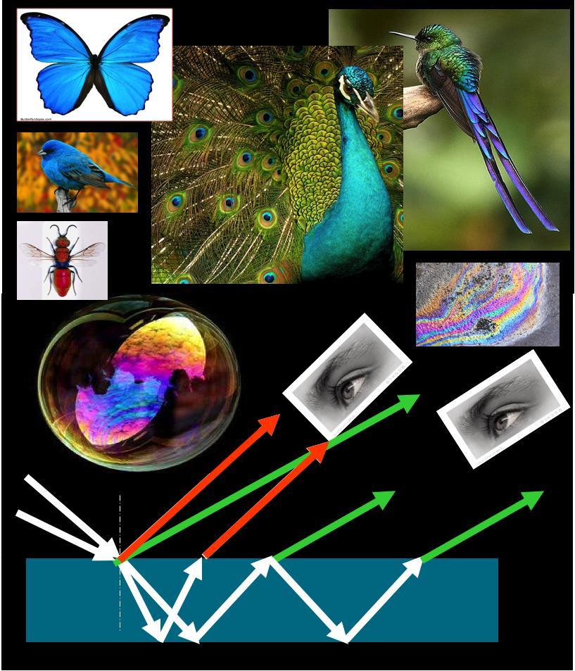 Esempi di iridescenza in natura legata a nanostrutture o film sottili